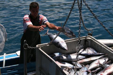 que pescamos 3